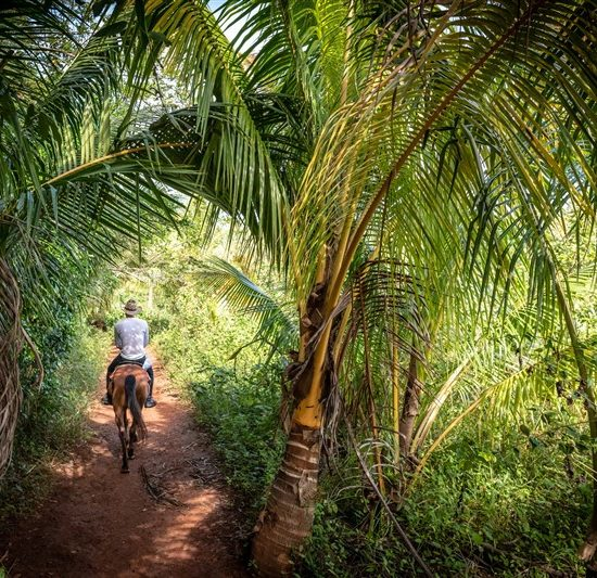 Horse riding in the lush forests of Vinales in Cuba